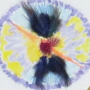 Coop-funeraire-estrie-mandala-4