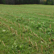 Gala-environnement-Agriculture-mais-ray-grass-2